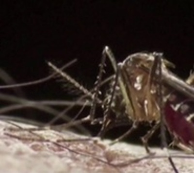 Dengue: Advierten que epidemia será más fuerte