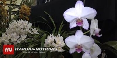 PIRAPÓ: LA CAPITAL DE LAS ORQUÍDEAS PREPARA UNA GRAN FIESTA