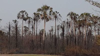 El 40% restante de la reserva natural está a merced de las llamas