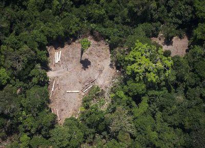 ONU discute sobre clima en Brasil en plena polémica de Bolsonaro por Amazonía
