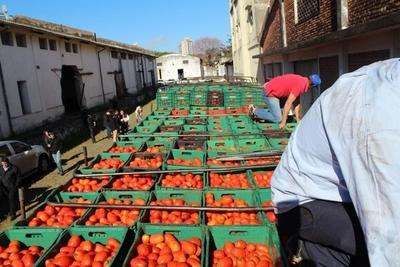 Tomateros en crisis: ministro del MAG habla de fortalecer el trabajo de asociaciones