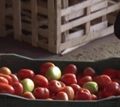 Golpe al contrabando: Incautan 600 cajas de tomate