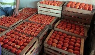 Incautan tomate de contrabando