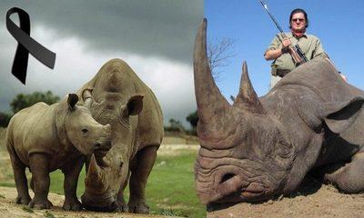 37 años de prisión para cazador que mató una rinoceronte y su cría