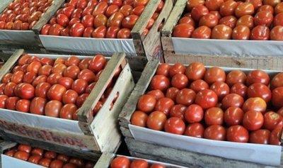 Productores de tomate mantienen un acuerdo temporal con el Gobierno