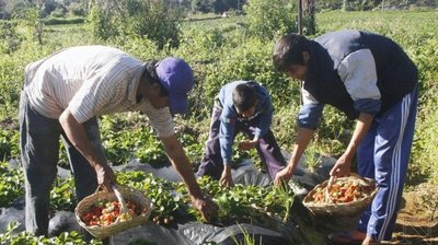 Gobierno ratifica apoyo a productores frutihortícolas
