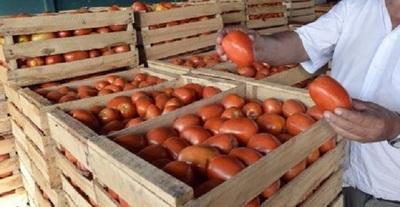 Productores preparan 10 mil kilos de tomates para la venta en Asunción