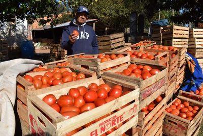 Éxito rotundo en feria de tomates: 12.000 kilos vendidos en un sólo día » Ñanduti