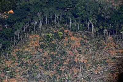 Trump ofrece a Bolsonaro ayuda de EEUU para combatir incendios en la Amazonía