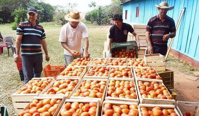 Hoy será el último día del tomate a G 2.500 el kilo