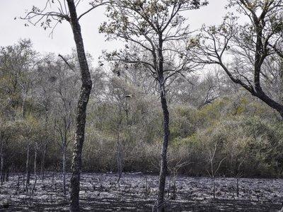 Instan a investigar a fondo origen de incendios forestales en Chaco