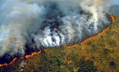 ANIMALES EN ESTAMPIDA Y UN SILENCIO ESTREMECEDOR SE APODERAN DE LA AMAZONIA