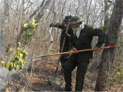 Bolivia: Anuncian medidas drásticas para reforestar áreas incendiadas