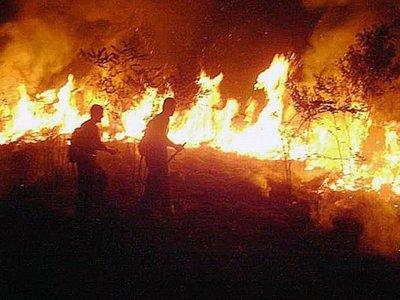 Refuerzos llegarán a  7 estados para combatir las llamas en la  Amazonia