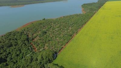 Recuperan el 90% de los bosques deforestados a orillas del lago Itaipú