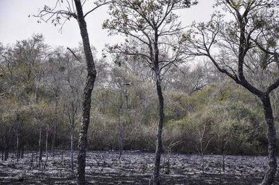 Hay 16 focos de incendios en el Chaco; evacuaron estancias y la muerte de animales es inminente