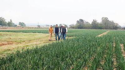 Día de campo sobre producción de cebolla
