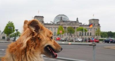 Berlín, la ciudad donde los perros casi son ciudadanos