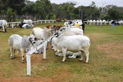 Biotipo ideal para una producción de carne