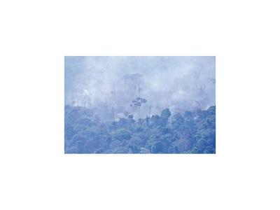 Brasil prohíbe quemas y  ONU propone cumbre sobre la Amazonia