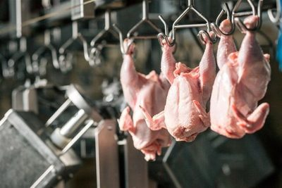 Sector avícola mantiene ritmo pese a recesión