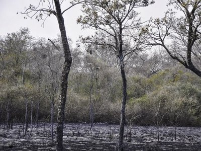Suman 61.000 hectáreas calcinadas en el incendio del Pantanal