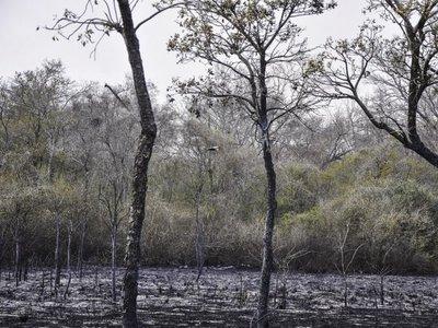 Suman 61.000 hectáreas calcinadas por incendio en el Chaco paraguayo