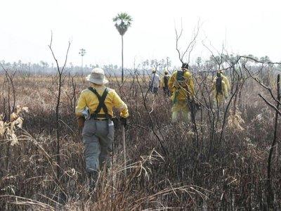 Bahía Negra: Fuego  ya afectó más de 61.000 ha.  y continúa  amenaza