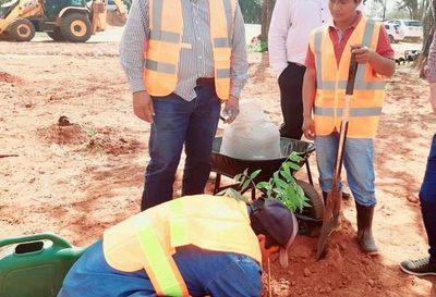 Plantan árboles para compensar obras de duplicación