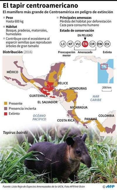 Salvar al tapir, apuesta de un zoo expropiado a narcos