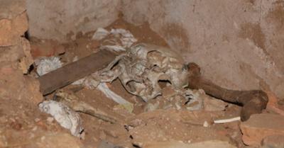 Ojetopa restos óseos en casa de Stroessner