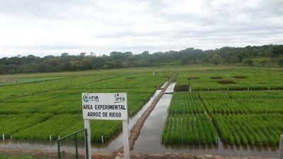 El arroz  en los sistemas de producción