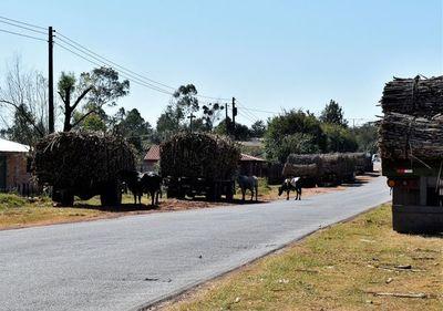Pretenden retirar animales sueltos de las calles en Guairá
