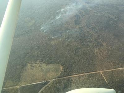 Presentan proyecto de Ley para proteger la reserva de la biósfera del Chaco