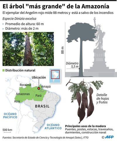 """Yvyramáta """"tuichavéva"""" Amazonía-pegua ipuku 88 metro ha ojesalváma tata rendýgui"""