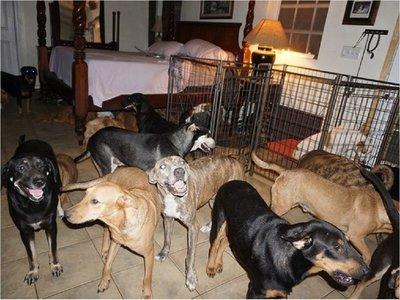 Una mujer salvó a 97 perros callejeros del huracán Dorian