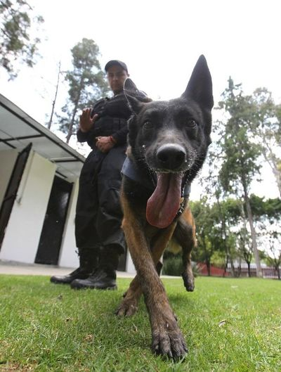 El perro, mejor amigo de diputados mexicanos