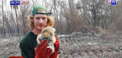 Voluntarios rescatan animales en el Chaco