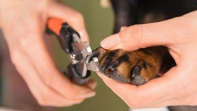 La insólita reacción de un perrito para evitar que dueña le corte las uñas