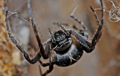 ¿Caca de...? Mujer sorprendida por excremento color negro descubre que era caca de araña