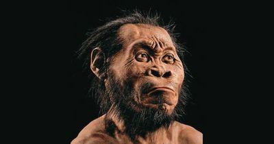 Científicos reconstruyen virtualmente el cráneo del ancestro del Homo Sapiens