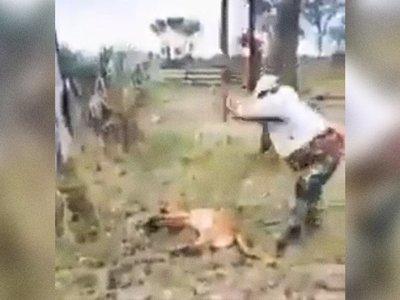 Mades investiga la brutal muerte de un puma