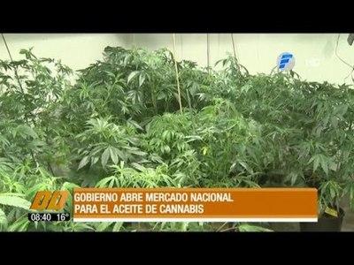 Gobierno abre mercado nacional para el aceite de cannabis