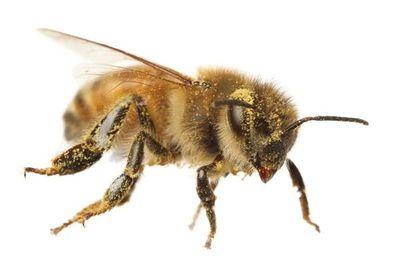 Los pesticidas dañinos para las abejas podrían matar también pájaros