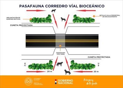 Corredor bioceánico: construirán ¨pasafaunas¨ para animales silvestres.