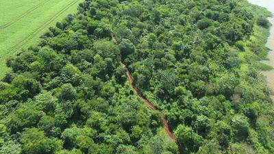 Marangatú, la mayor parcela reforestada de Itaipu con más de 184 hectáreas plantadas