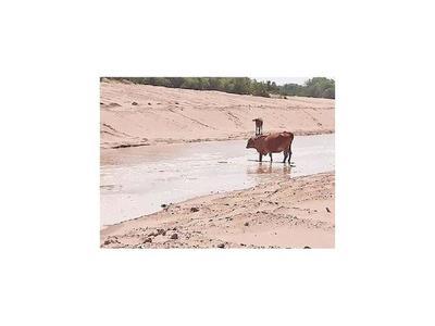 Pilcomayo: El 30% de aguas  ingresan al canal paraguayo