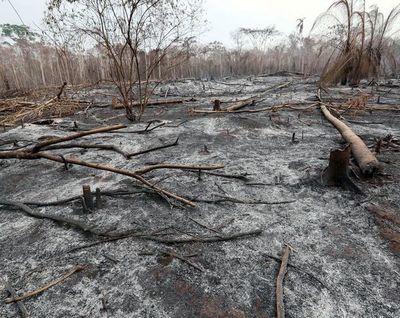 Estragos en flora y fauna por incendios en Bolivia