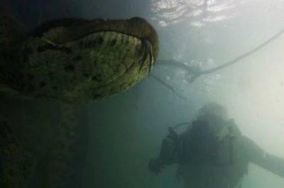 Espectaculares imágenes de una anaconda gigante (video)