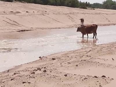 El 30% de las aguas del Pilcomayo ingresan por el nuevo canal Meyer, sostienen